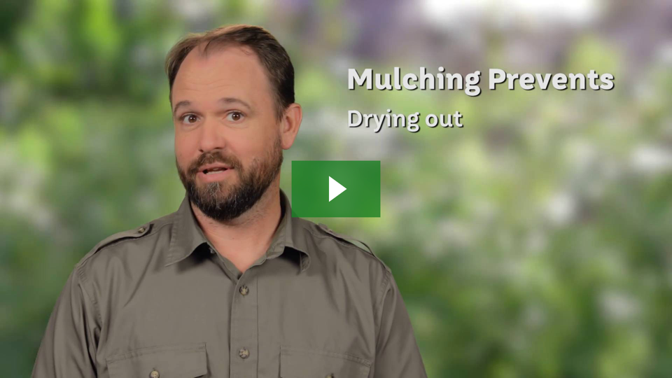 Learn why proper mulching matters