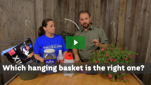 Hanging Baskets Plants For All Seasons