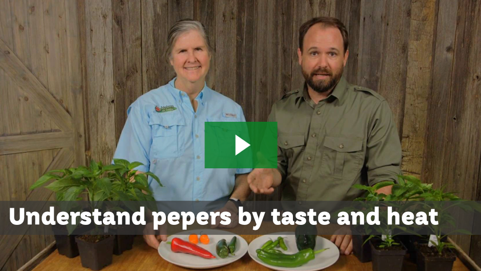 Pick Peppers For Taste and Heat