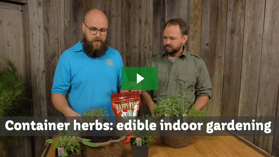 Container Herbs: edible indoor gardening