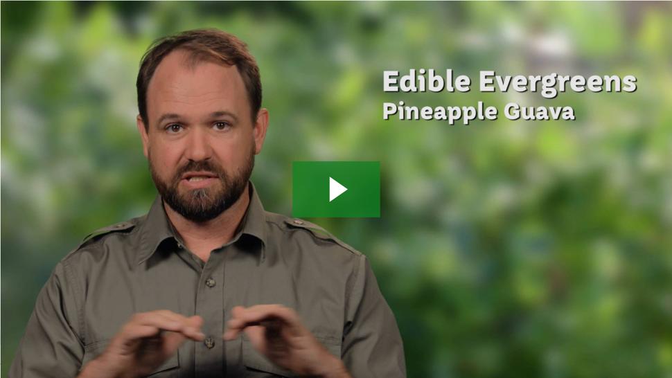 Dany Says: Edible Evergreens Add Fun & Flavor