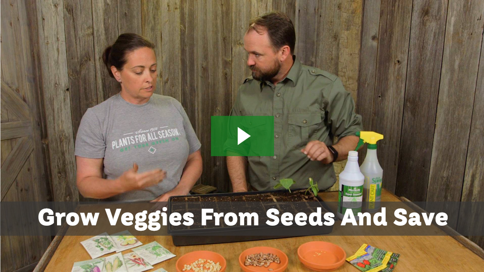 Grow vegetables from seeds the right way