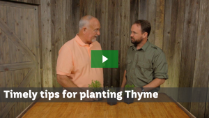 Thyme Tips