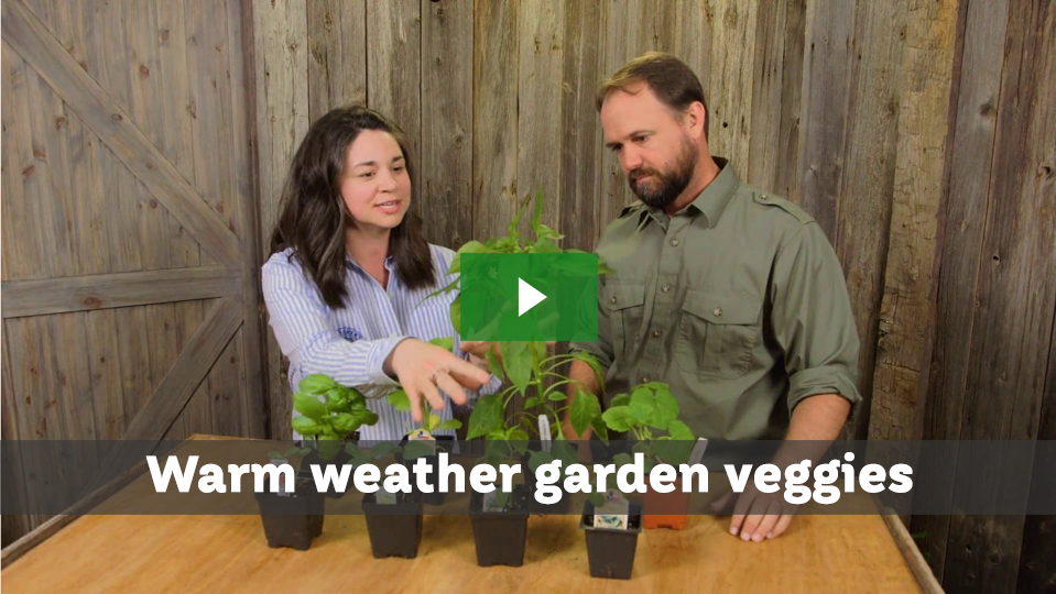 Warm weather garden veggies