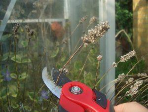 Deadheading Flowers - HomeShow Garden Pros