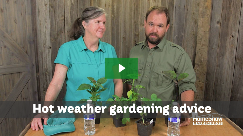 Hot weather gardening advice to keep you safe