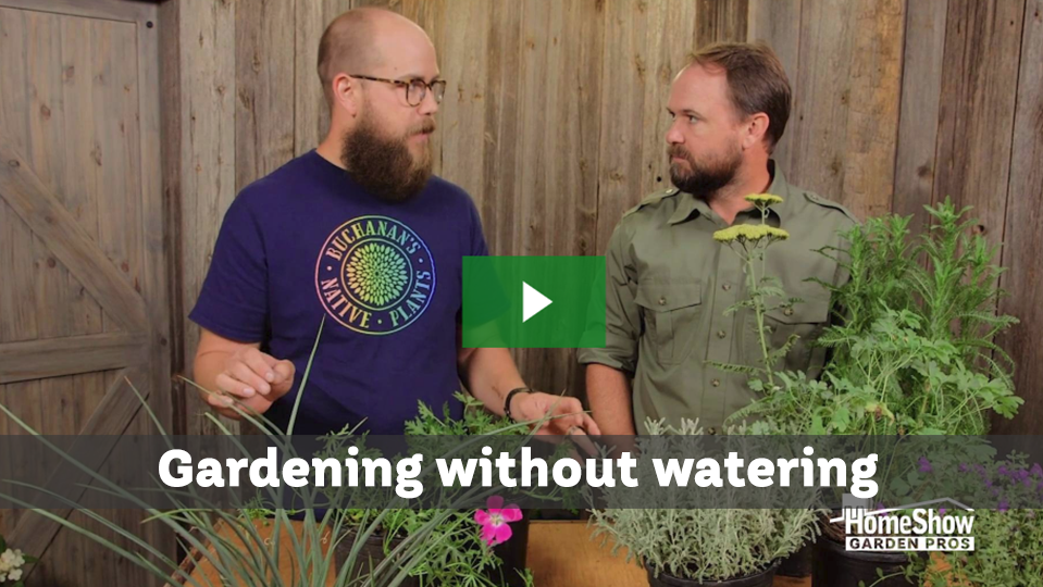 Gardening without watering with arid plants