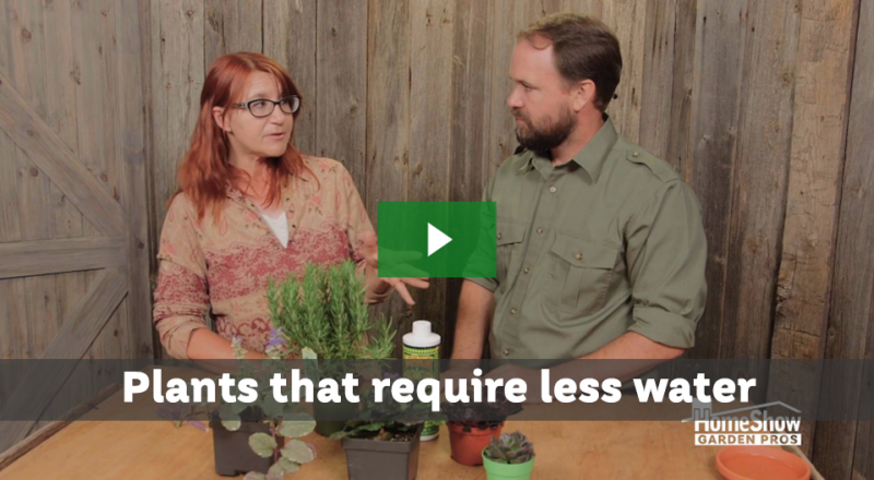 Plants that require less water and maintenance