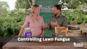controlling lawn fungus
