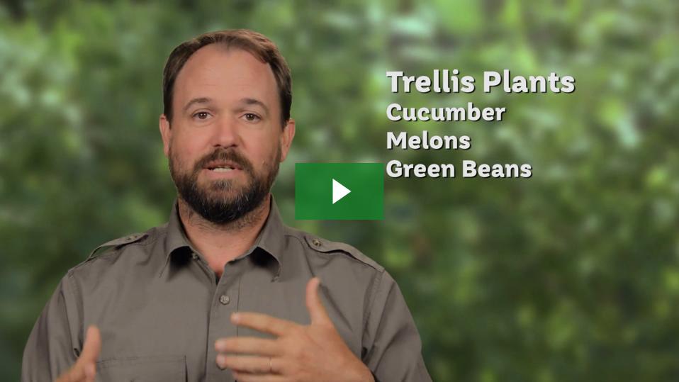 Trellis Tips