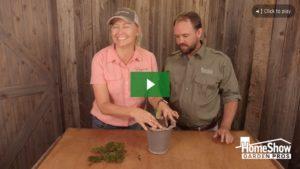 Planting amarylis bulbs