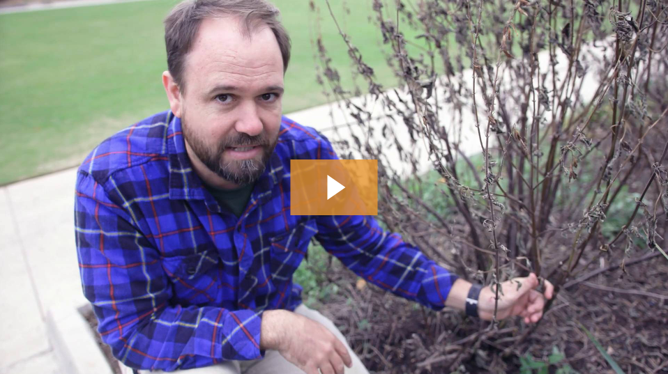 When to prune frozen plants