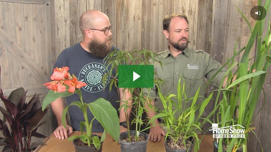 Wet Area Plants