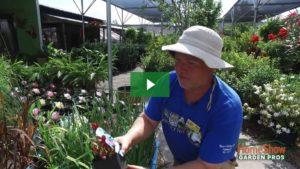 Best bog plants for houston area