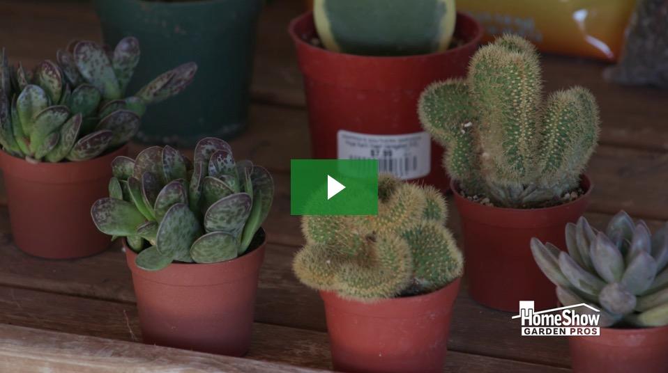 Pet Plants