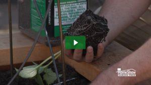 Cucumber Care