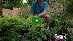 Best Plants for Full Sun Texas