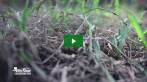 Remove Sod Webworms