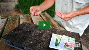 Summer Seed Planting for Fall