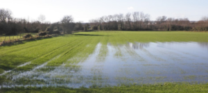 water - water retention
