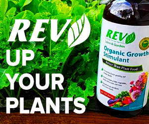 REV Growth Stimulant