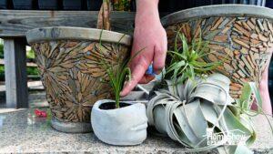 Proper Indoor Plant Care